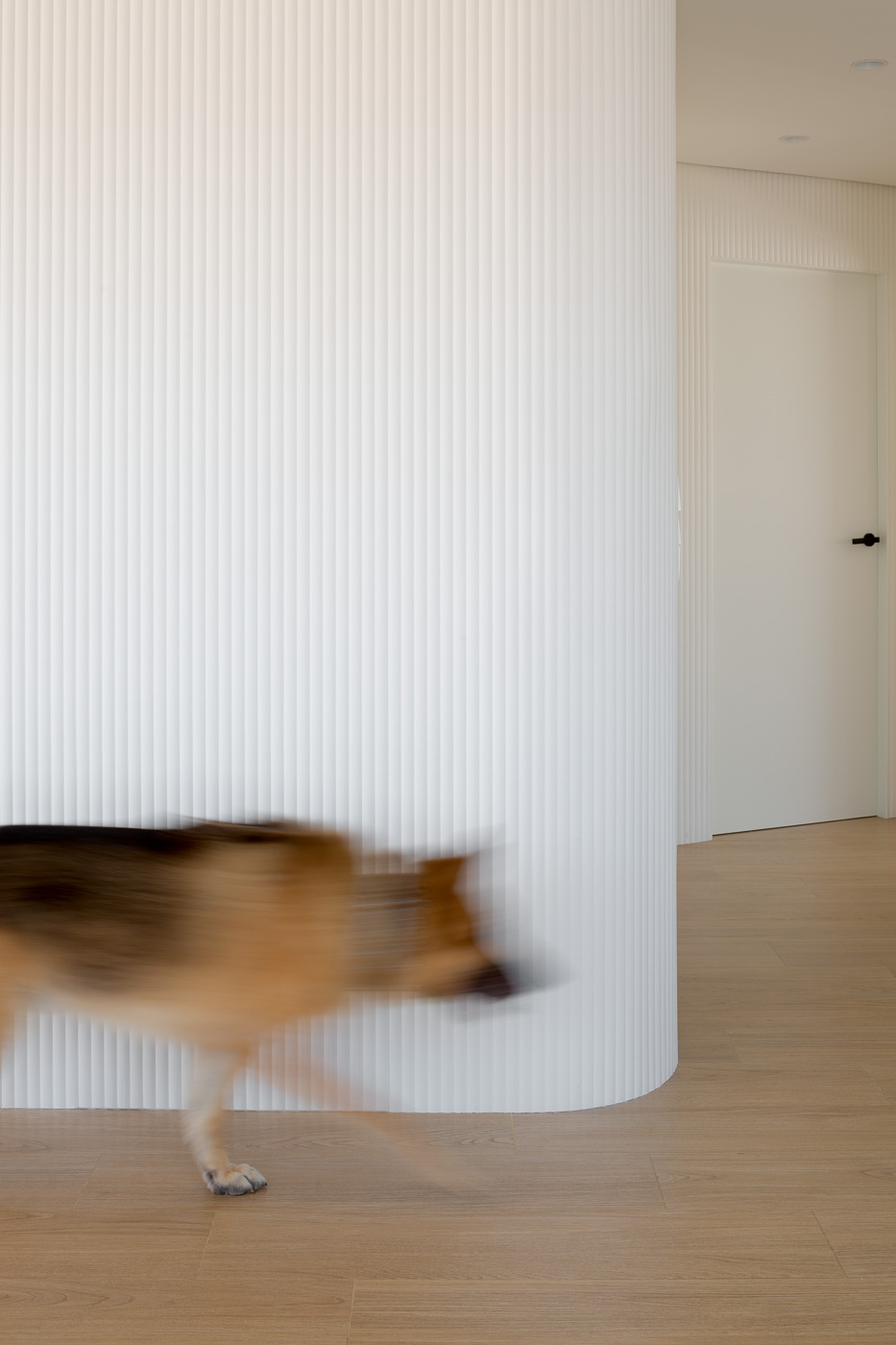 NAYA arquitectos alicante atico en guardamar dunkan